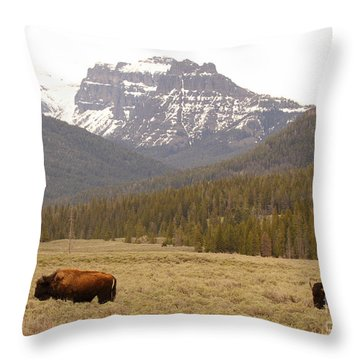 Throw Pillow featuring the photograph Bison Pair Beneath Mountains by Max Allen