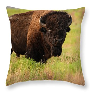 Bison Prime Throw Pillow