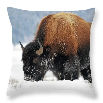 Bison Roaming In The Lamar Valley Throw Pillow