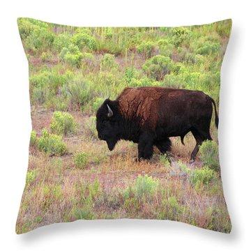 Bison1 Throw Pillow
