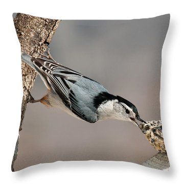 Throw Pillow featuring the photograph Bit Off More Than He Could Chew by Lara Ellis