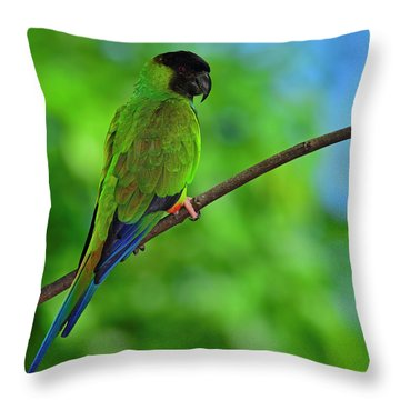 Throw Pillow featuring the photograph Black And Blue by Tony Beck