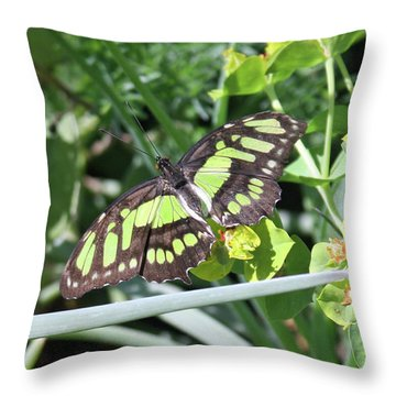 Black And Green Butterfly Throw Pillow