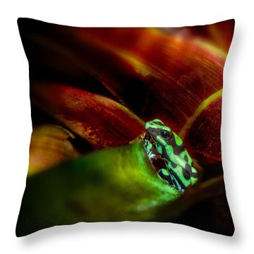 Throw Pillow featuring the photograph Black And Green Dart Frog In The Red Bromeliad by Rikk Flohr