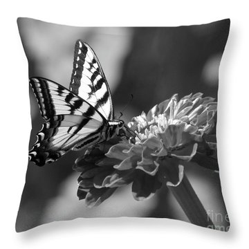 Black And White Butterfly On Zinnia Throw Pillow by Jim And Emily Bush