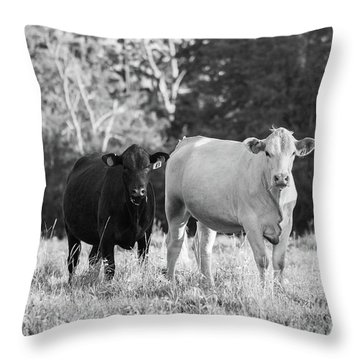 Black And White Cows Throw Pillow