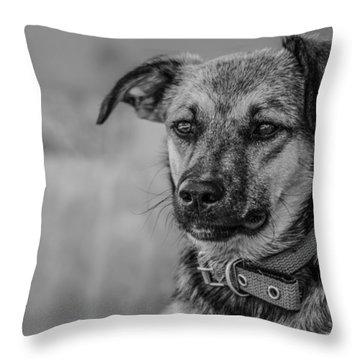 Black And White Dog Portrait Throw Pillow by Daniel Precht