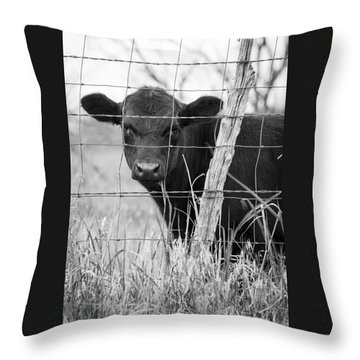Black Angus Calf Throw Pillow