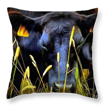 Black Angus Cow  Throw Pillow