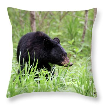 Throw Pillow featuring the photograph Black Bear by Andrea Silies
