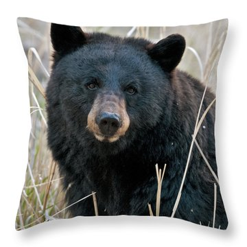 Black Bear Closeup Throw Pillow by Gary Langley