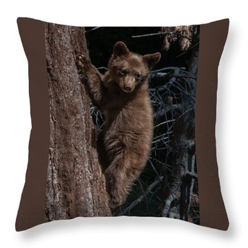 Black Bear Cub Sequoia National Park Throw Pillow