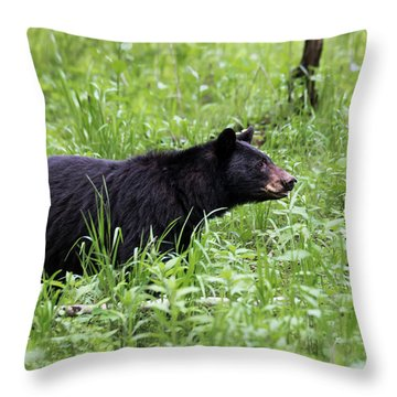 Throw Pillow featuring the photograph Black Bear In The Woods by Andrea Silies