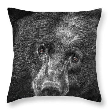 Black Bear Portrait 3 Throw Pillow by Mitch Shindelbower