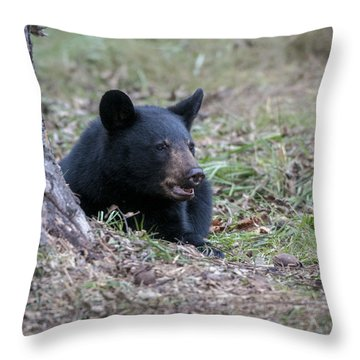 Black Bear Resting Throw Pillow