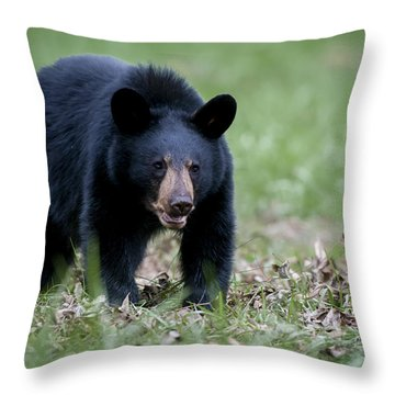 Throw Pillow featuring the photograph Black Bear by Tyson and Kathy Smith