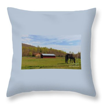Black Beauty Throw Pillow by Charlotte Gray