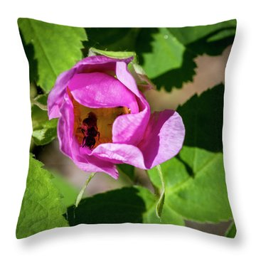 Throw Pillow featuring the photograph Black Bee Collecting Pollen by Darcy Michaelchuk