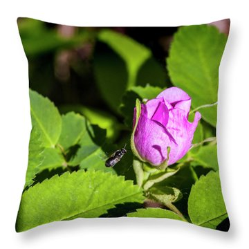 Throw Pillow featuring the photograph Black Bee On Approach by Darcy Michaelchuk