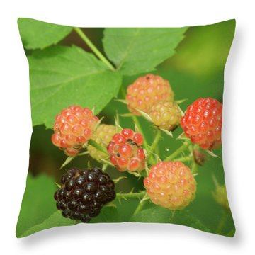 Black Berries Throw Pillow by Michael Peychich
