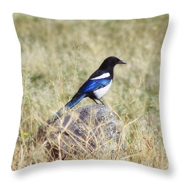 Black-billed Magpie Throw Pillow by Janie Johnson