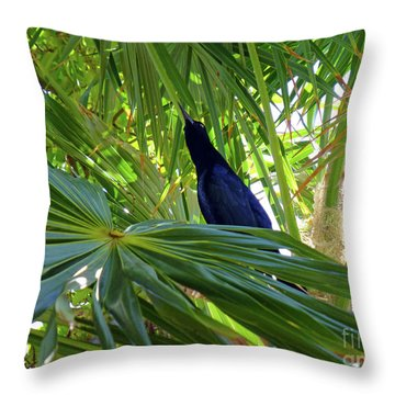 Throw Pillow featuring the photograph Black Bird And Green Leaf by Francesca Mackenney