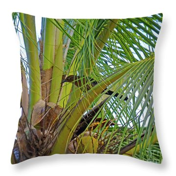 Throw Pillow featuring the photograph Black Bird In Tree by Francesca Mackenney