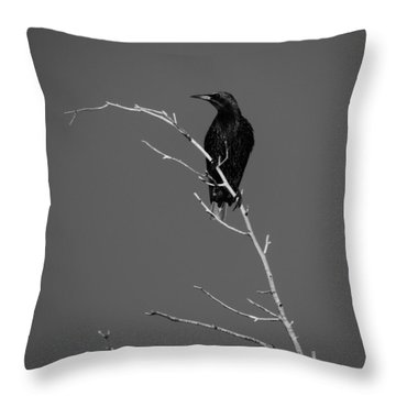 Black Bird On A Branch Throw Pillow