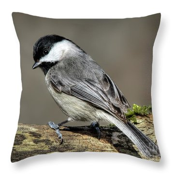 Black-capped Chichadee Throw Pillow
