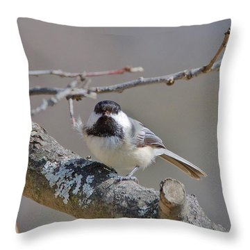 Black Capped Chickadee 1109 Throw Pillow by Michael Peychich