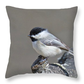 Black Capped Chickadee 1128 Throw Pillow by Michael Peychich