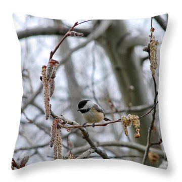 Black-capped Chickadee 20120321_38a Throw Pillow by Tina Hopkins