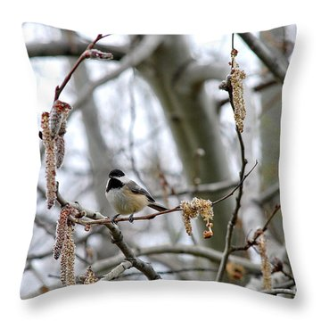 Black-capped Chickadee 20120321_39b Throw Pillow by Tina Hopkins