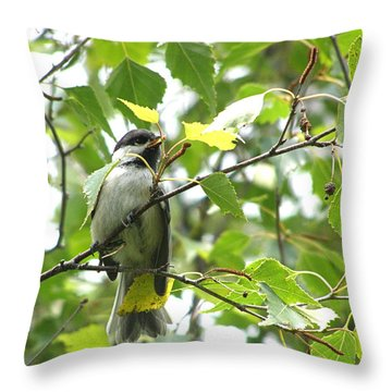 Throw Pillow featuring the photograph Black Capped Chickadee  by Angie Rea