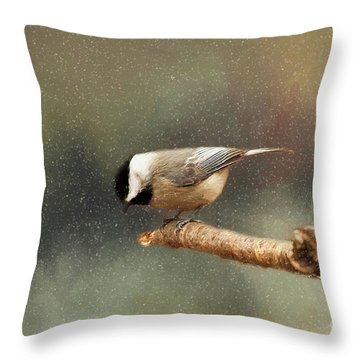 Throw Pillow featuring the photograph Black Capped Chickadee by Darren Fisher