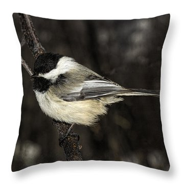 Black-capped Chickadee Throw Pillow