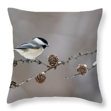 Throw Pillow featuring the photograph Black-capped Chickadee by Mircea Costina Photography