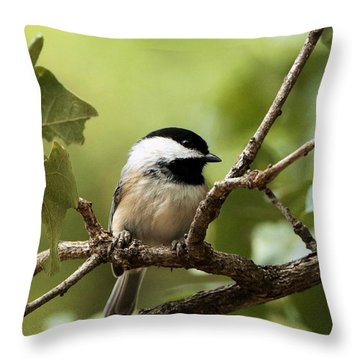 Black Capped Chickadee On Branch Throw Pillow by Sheila Brown