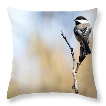 Black-capped Chickadee Throw Pillow by Shevin Childers