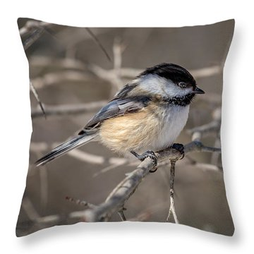Black-capped Chickadee Iv Throw Pillow