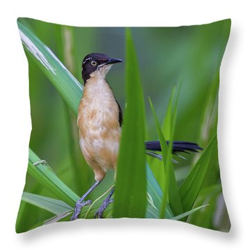 Black-capped Donacobius Throw Pillow