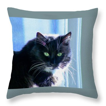 Black Cat In Sun Throw Pillow