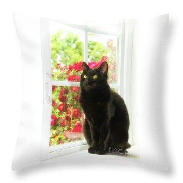 Black Cat In White Frames Throw Pillow