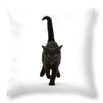 Black Cat On The Run Throw Pillow