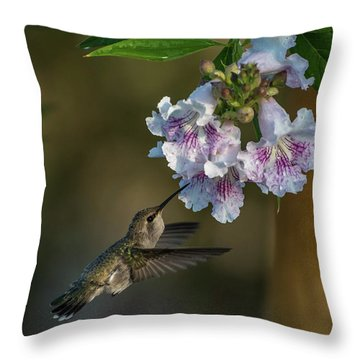 Black-chinned Hummingbird Throw Pillow