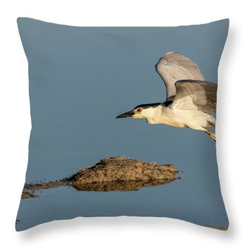 Black-crowned Night Heron 2017-4 Throw Pillow
