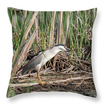 Black-crowned Night Heron 2018-1 Throw Pillow