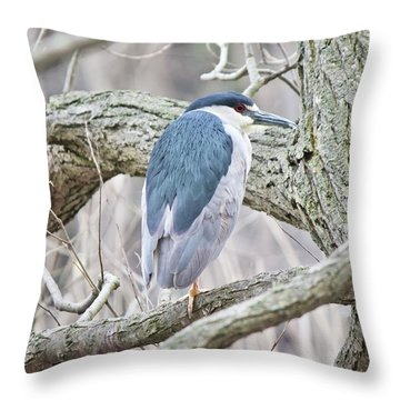 Black-crowned Night-heron  Throw Pillow