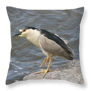 Throw Pillow featuring the photograph Black-crowned Night Heron by Doris Potter