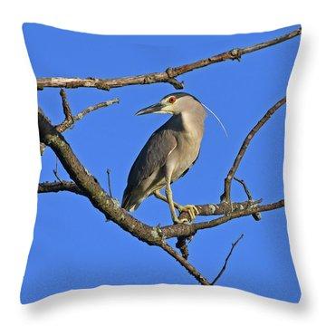 Black-crowned Night Heron Throw Pillow